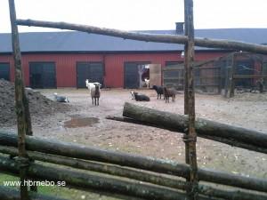 Vinterhagen och stallet på Nolhaga Djurpark