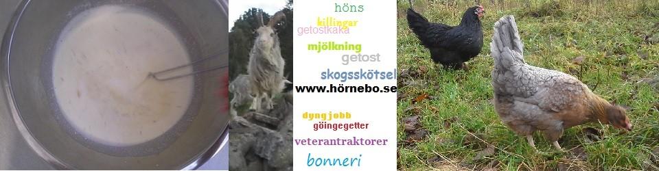 Löten i Hörnebo