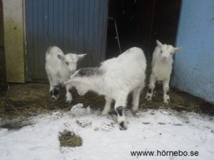 Aste flankerad av sina systerbarn Sofie och Patrik får se snö för första gången. Vad ÄR detta?!