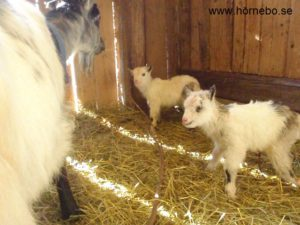 Annika med sina första tvillingar Sofie och Patrik. Tur att hon har gott om mjölk!